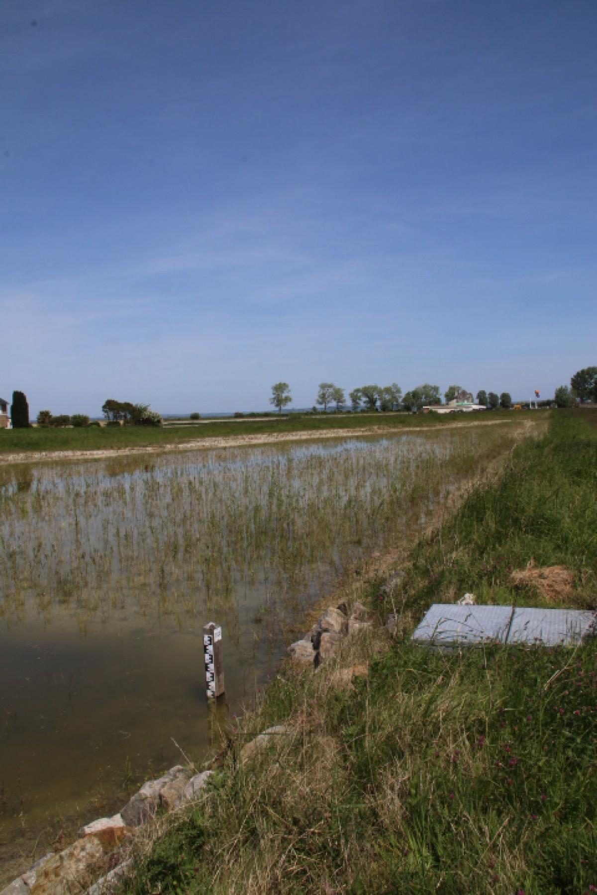 Echelle limnimétrique  Parc de staionnement Baie du motn ST Michel créationd e roselière (1 an après plantation.JPG
