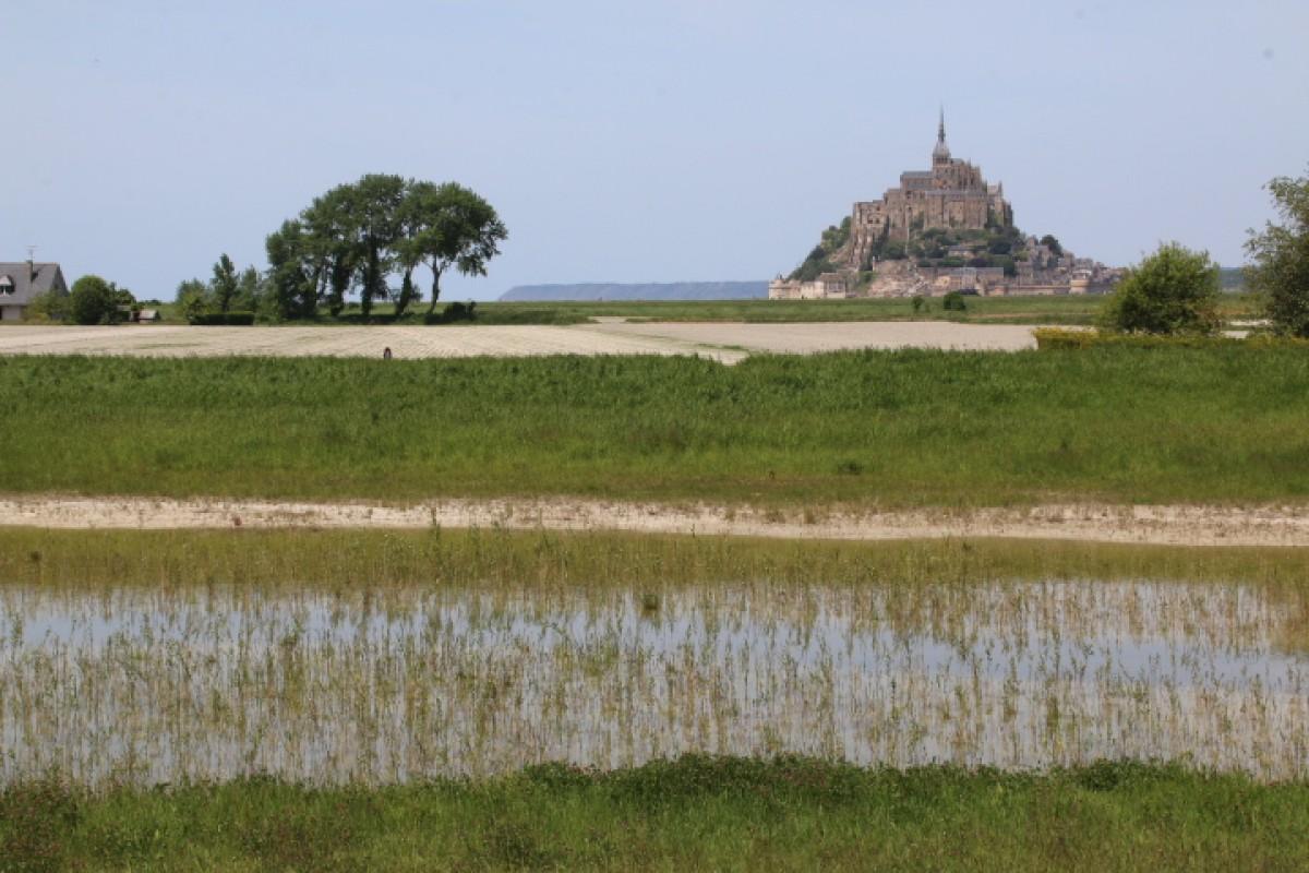 Parc de staionnement Baie du motn ST Michel créationd e roselière (1 an après plantation.JPG